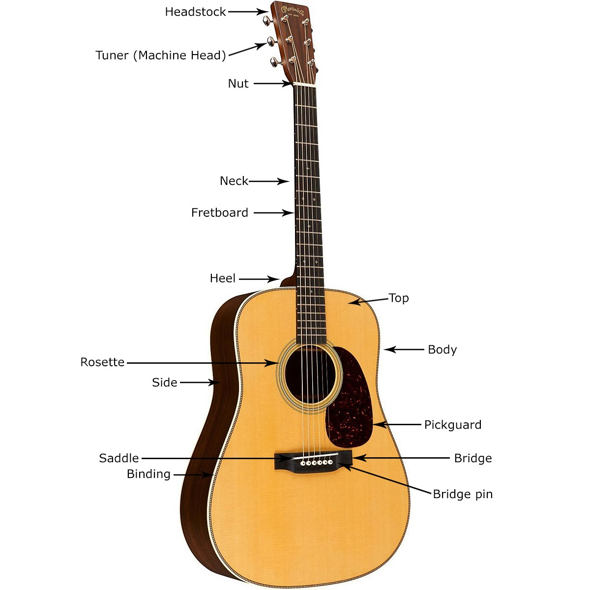 Acoustic Guitar Anatomy and Parts