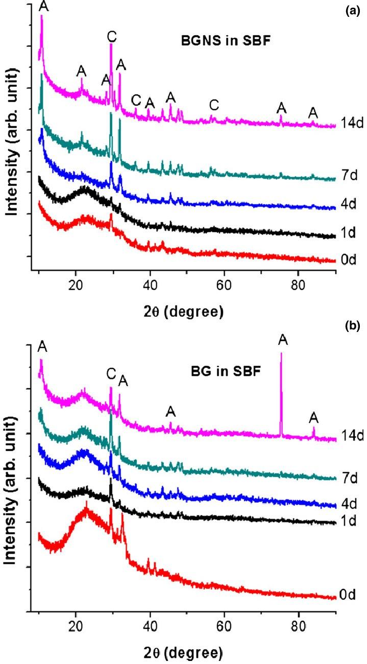 Control Diagram New Fig 8 Xrd Patterns Bgns A Nanocoating and Control Bg B