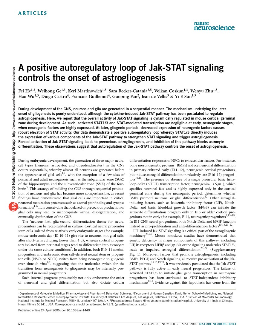 PDF A positive autoregulatory loop of JAK STAT signalling controls the onset of astrogliogenesis